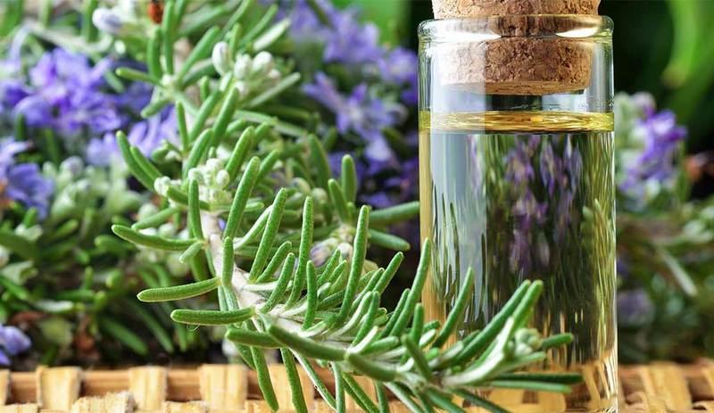 Minyak Rosemary