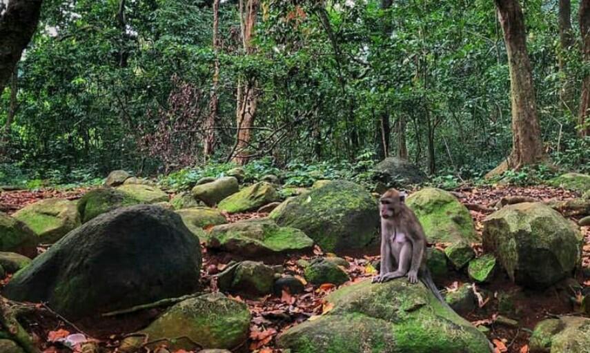 Destinasi Wisata Cirebon Hutan Plangon