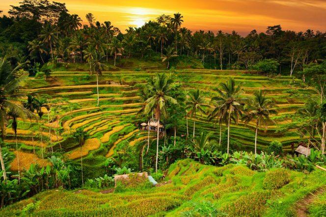 Ubud masuk ke dalam daftar 25 Kota Terbaik di Dunia versi Travel+Leisure. (Foto: whatsnewindonesia.com)